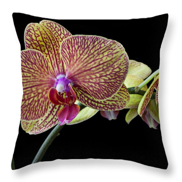 Baeutiful Orchids Throw Pillow by Garry Gay