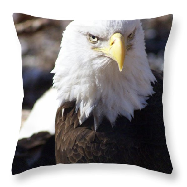 Bald Eagle 1 Throw Pillow by Marty Koch
