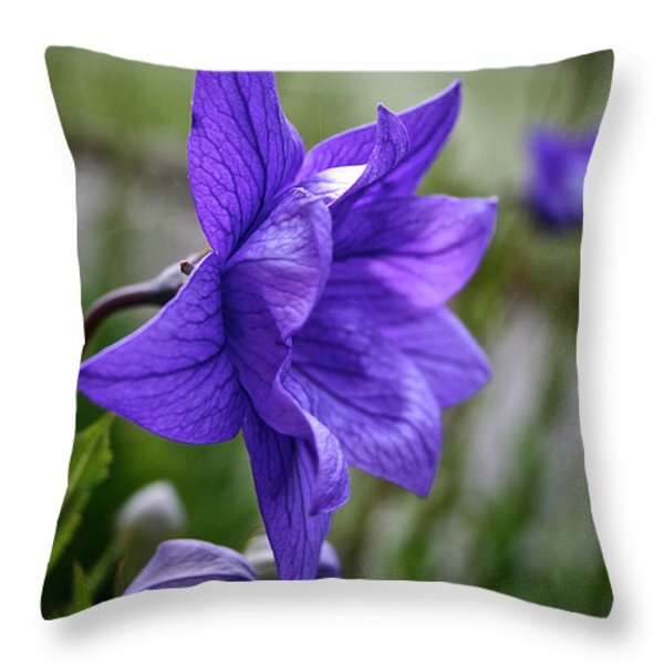Balloon Flower Profile Throw Pillow by Susan Herber