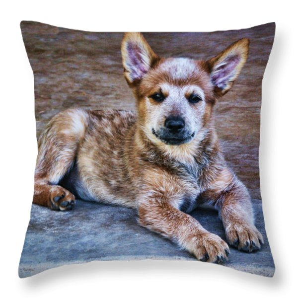 Bandit  Throw Pillow by Saija  Lehtonen
