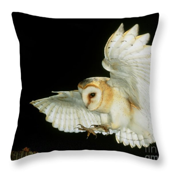 Barn Owl Throw Pillow by Andy Harmer and SPL and Photo Researchers