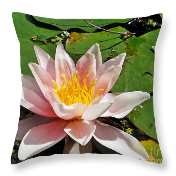 Basking In The Sunshine Throw Pillow by Kaye Menner