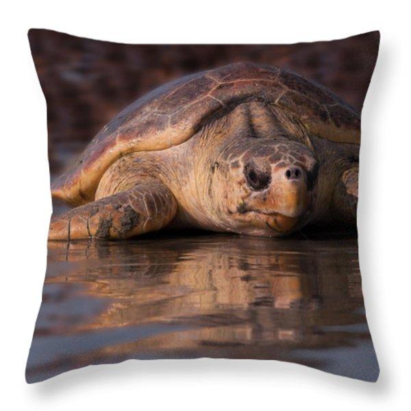 Beaufort The Turtle Throw Pillow by Susan Cliett