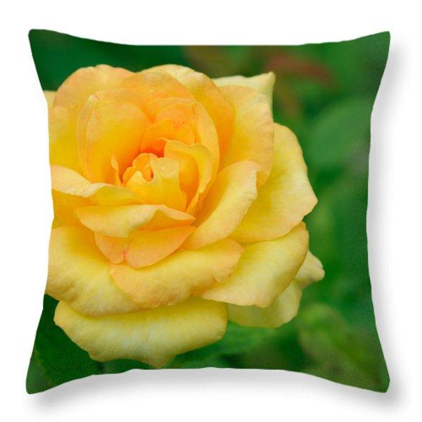 Beautiful Yellow Rose Throw Pillow by Atiketta Sangasaeng