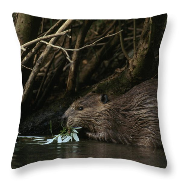 Beaver Building A Dam, Ozark Mountains Throw Pillow by Randy Olson