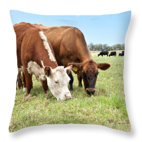 Beef Cattle Grazing In Pasture Throw Pillow by Inga Spence and Photo Researchers