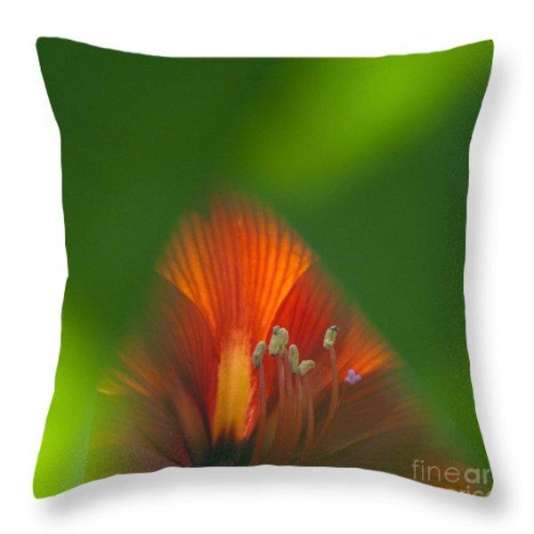 Belladonna Lily Closeup Throw Pillow by Heiko Koehrer-Wagner