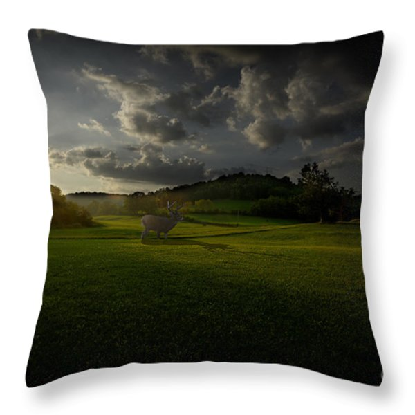 Big Buck In Field At Sunset Throw Pillow by Dan Friend