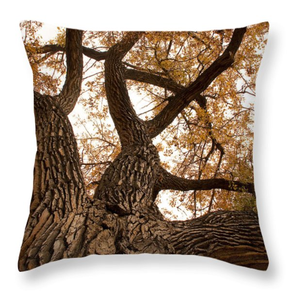 Big Tree Throw Pillow by James BO  Insogna
