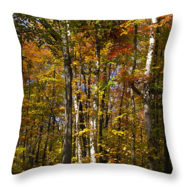 Birch Trail Throw Pillow by Jo-Anne Gazo-McKim
