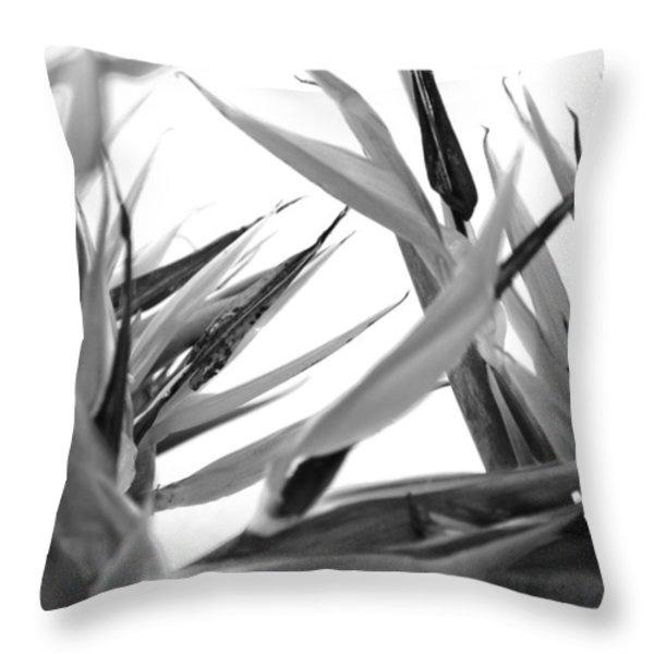 Bird Of Paradise  Throw Pillow by Sumit Mehndiratta