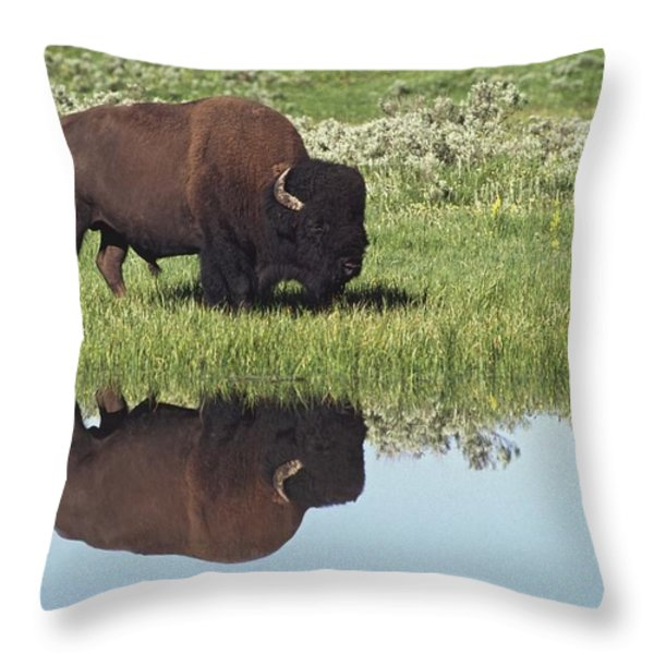 Bison Bison Bison On Grassy Meadow With Throw Pillow by David Ponton