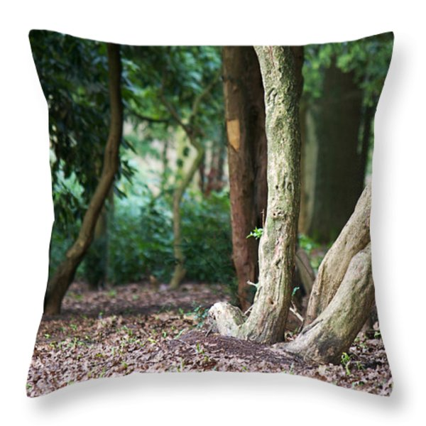 Bizarre trees Throw Pillow by Angela Doelling AD DESIGN Photo and PhotoArt