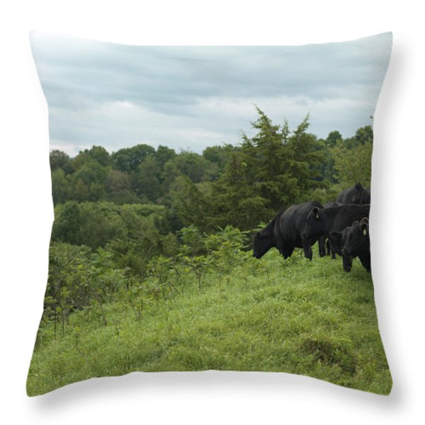 Black Angus Cattle Throw Pillow by Justin Guariglia