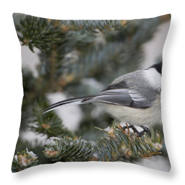 Black-capped Chickadee, Poecile Throw Pillow by John Cancalosi