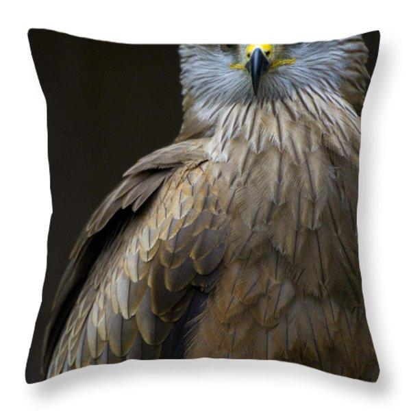 Black Kite 2 Throw Pillow by Heiko Koehrer-Wagner
