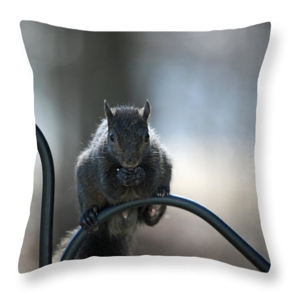 Black Squirrel  Throw Pillow by Karol Livote
