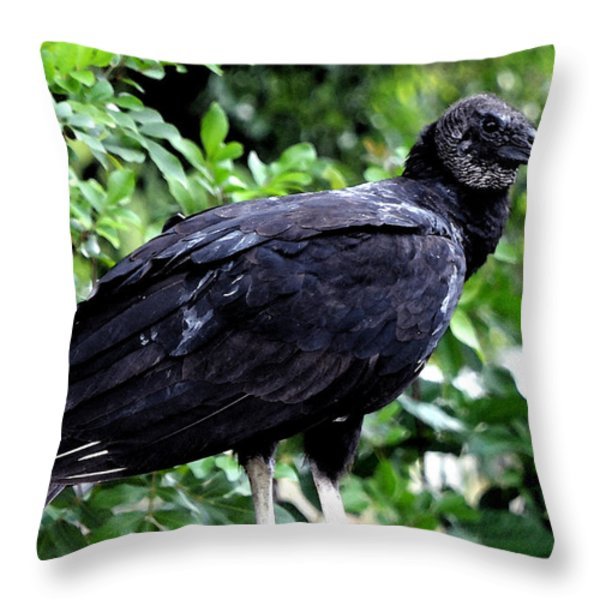 Black Vulture At The Everglades Throw Pillow by Pravine Chester