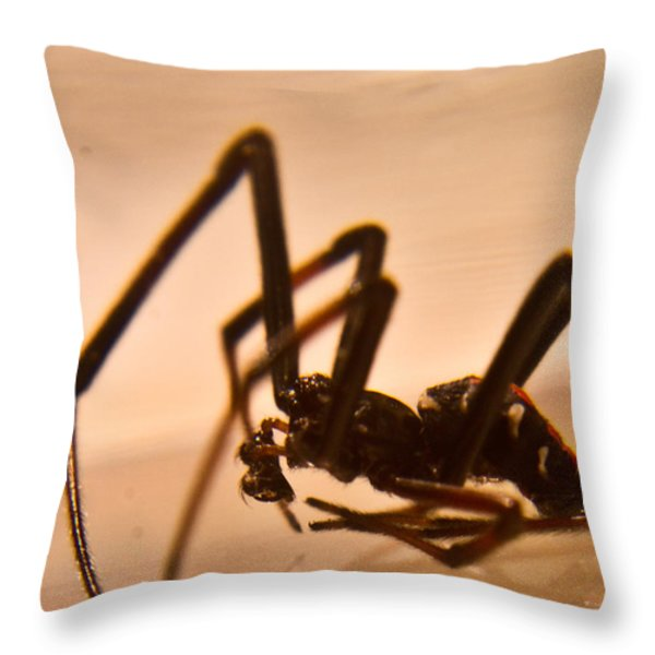 Black Widow Male 2 Throw Pillow by Douglas Barnett