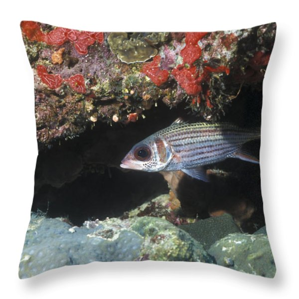 Blackfin Squirrelfish Swimming Throw Pillow by Michael Wood
