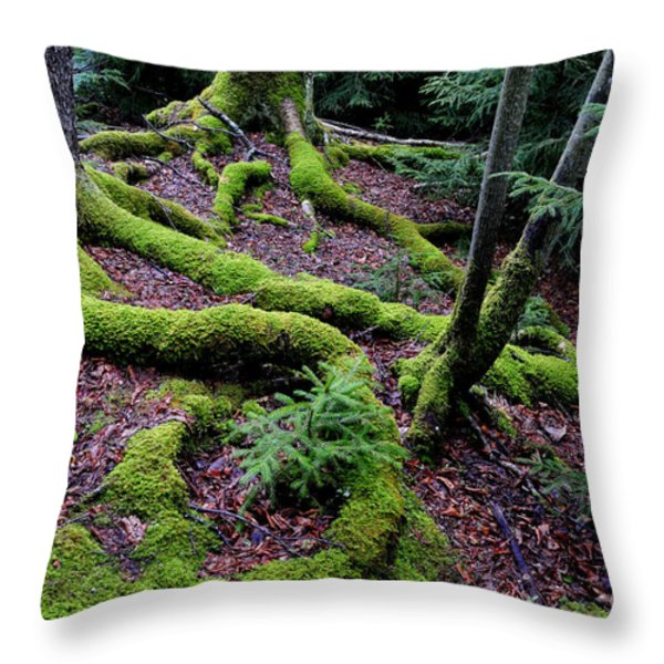 Blackwater Falls State Park Throw Pillow by Thomas R Fletcher