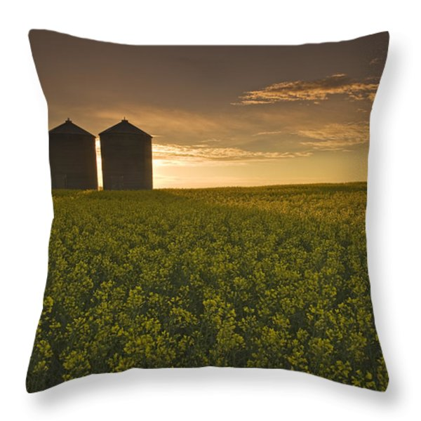 Bloom Stage Canola Field With Grain Throw Pillow by Dave Reede