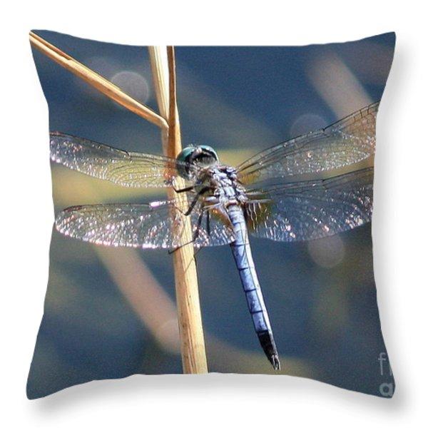 Blue Dragonfly Throw Pillow by Carol Groenen