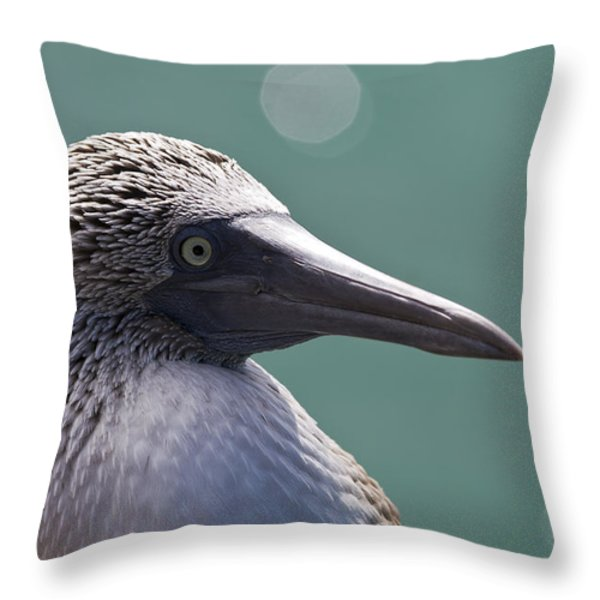 Blue Footed Booby II Throw Pillow by Dave Fleetham