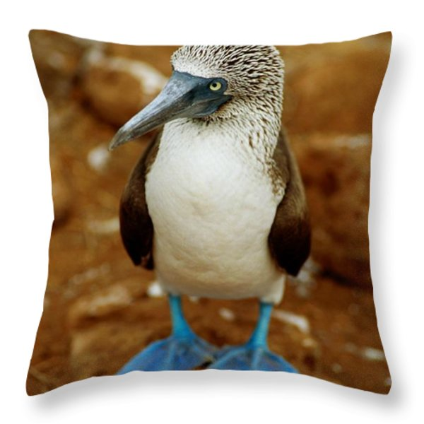 Blue-footed Booby Sula Nebouxii Throw Pillow by James P. Blair