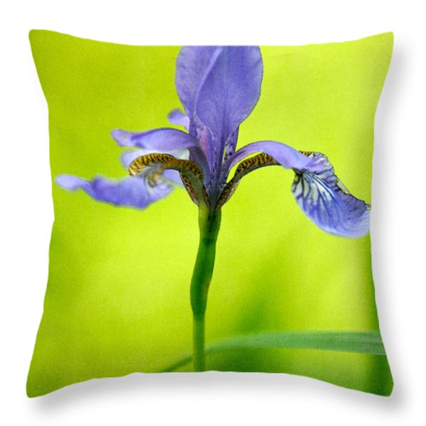 Blue Japanese Iris Throw Pillow by Lois Bryan