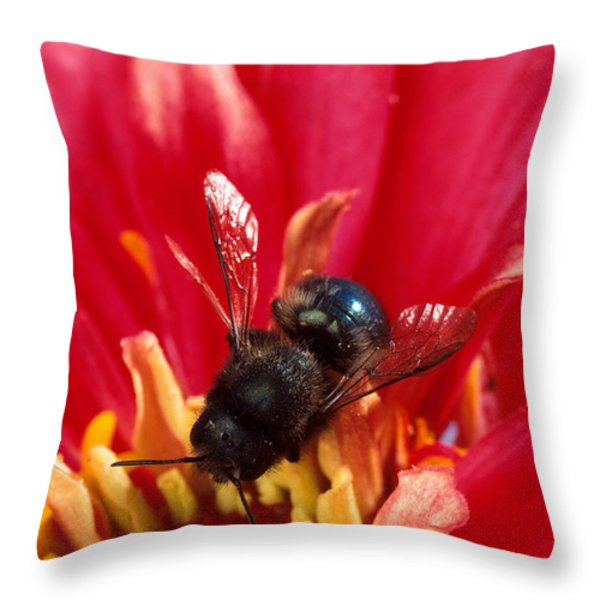 Blue Orchard Bee Throw Pillow by Scott Bauer