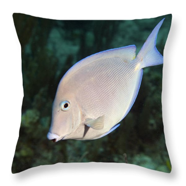 Blue Tang On Caribbean Reef Throw Pillow by Karen Doody