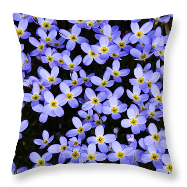 Bluets in Shade Throw Pillow by Thomas R Fletcher
