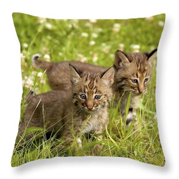Bobcat Kittens Throw Pillow by John Pitcher
