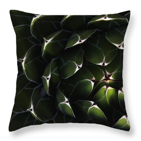 Bolivian Plant In Late Afternoon Light Throw Pillow by Robert Postma