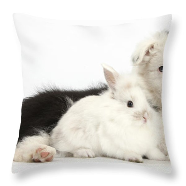 Border Collie Puppy With Baby Rabbit Throw Pillow by Mark Taylor