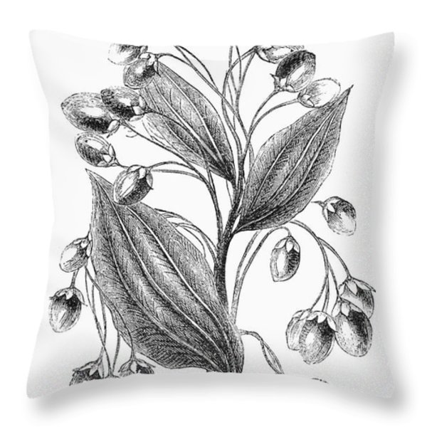 Botany: Cinnamon Plant Throw Pillow by Granger