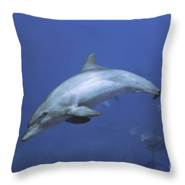 Bottlenose Dolphin Throw Pillow by Tom Peled