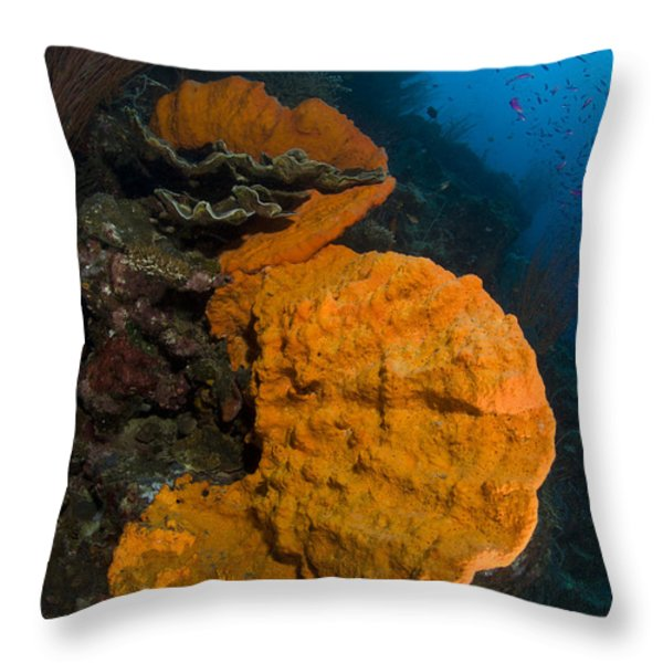 Bright Orange Sponge With Sunburst Throw Pillow by Steve Jones