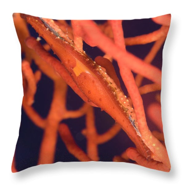 Bright Red Cowrie On Coral, Papua New Throw Pillow by Steve Jones