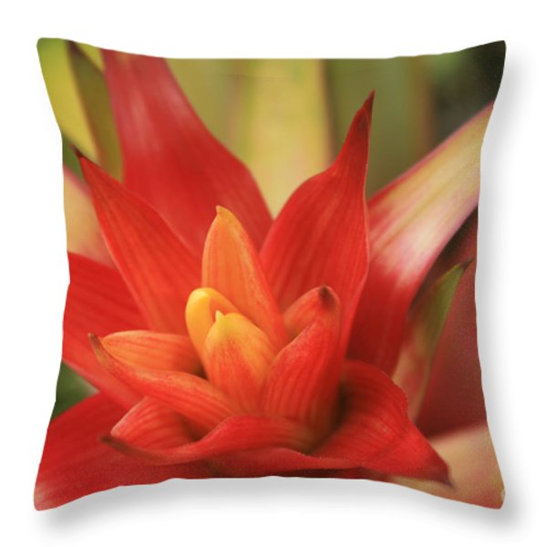 Bromeliad Throw Pillow by Sharon Mau