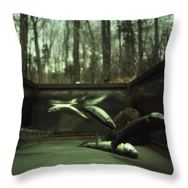 Brook Trout Confined In A Wire Cage Throw Pillow by Ted Spiegel