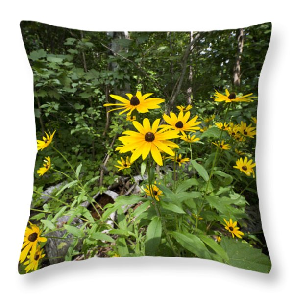Brown-eyed Susan in the woods Throw Pillow by Gary Eason