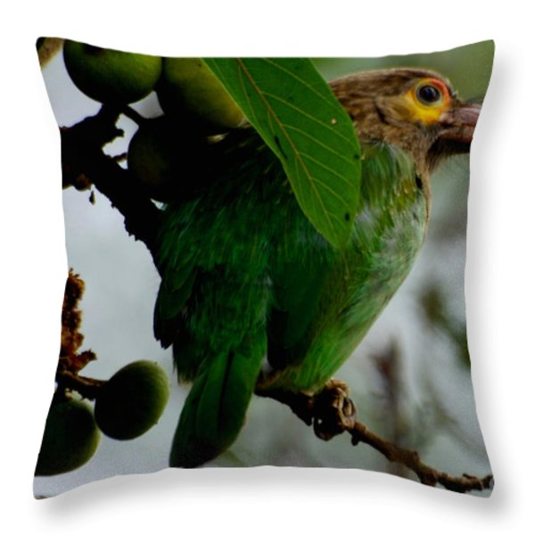 Brown-headed Barbet Throw Pillow by Pravine Chester