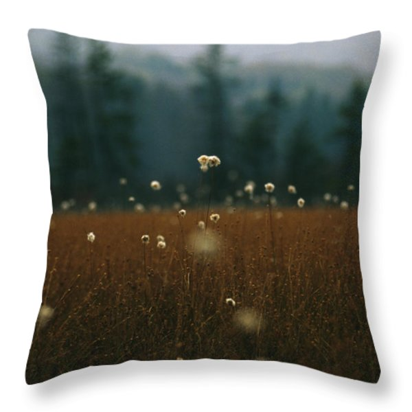 Browned Autumn Field Of Cotton Grass Throw Pillow by Raymond Gehman
