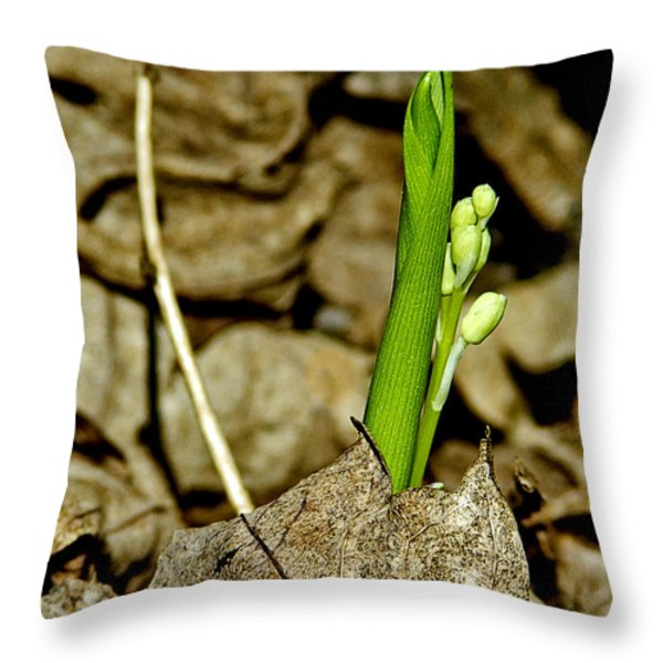 Budding Lilly Throw Pillow by LeeAnn McLaneGoetz McLaneGoetzStudioLLCcom