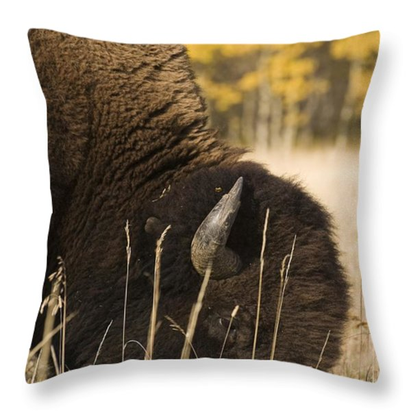 Buffalo Grazing Throw Pillow by Philippe Widling