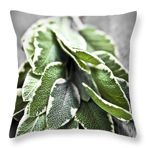 Bunch of fresh sage Throw Pillow by Elena Elisseeva