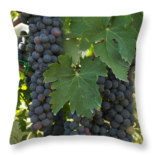 Bunches Of Sangiovese Grapes Hang Throw Pillow by Heather Perry