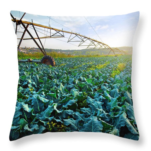 Cabbage Growth Throw Pillow by Carlos Caetano